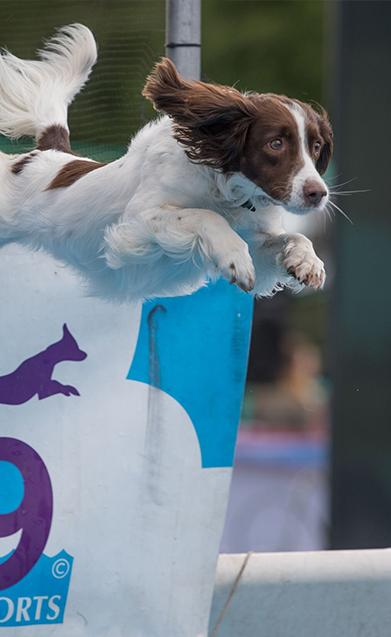 Dog taking part in K9 Aqua