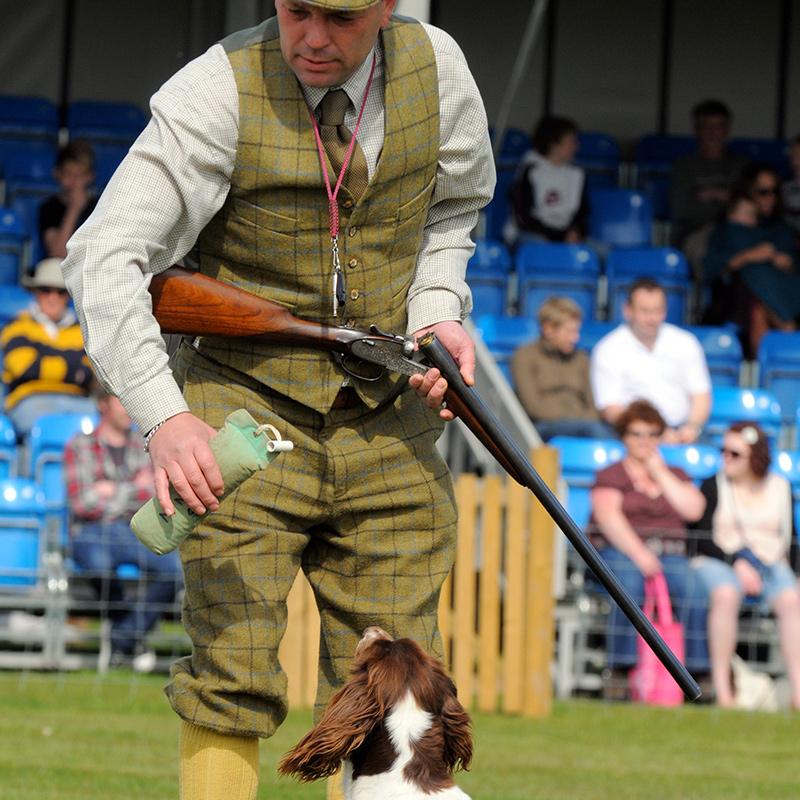 Mid Norfolk Gun dogs