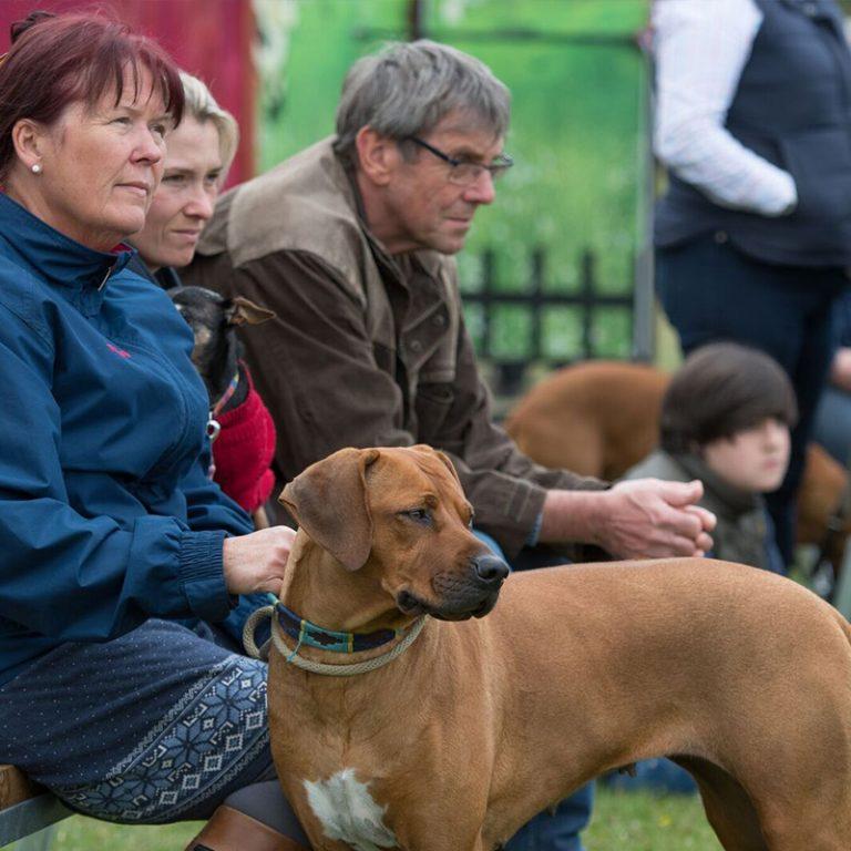 The pet dog show