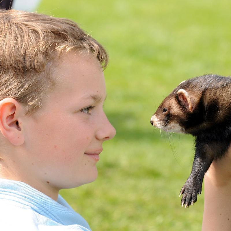 Ferret show