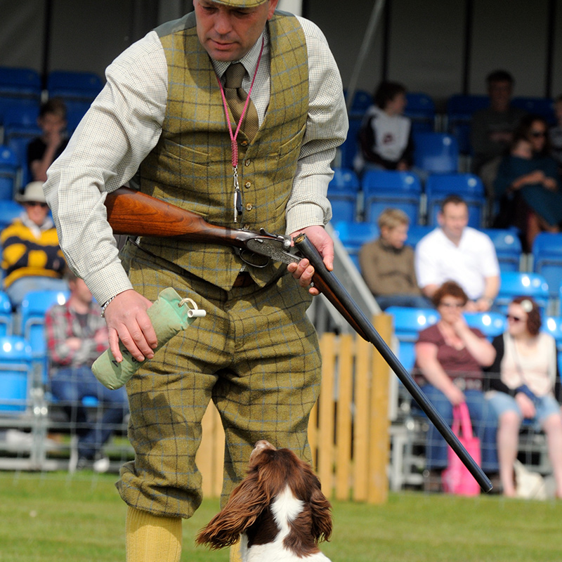 Mid Norfolk Gun dogs